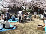お花見(上寺山)